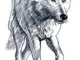 Draw A Wolf Standing Die 73 Besten Bilder Von Wolf Wolf Drawings Draw Animals Und Drawings