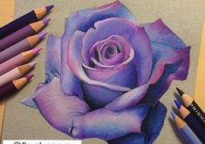 Draw An English Rose How to Draw A Realistic Rose In Pencil Drawings Drawings Art