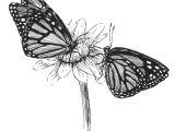Draw butterfly Easy butterflies Sketch by Kim Krans butterfly Sketch