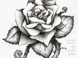 Draw Out A Rose Thorn Rose Tattoo Drawings and Designs Media Art Photography