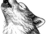 Draw Wolf Growling 180 Best Wolf Drawings Images Drawing Techniques Drawing