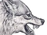 Draw Wolf Growling 68 Best Wolf Loup Images Draw Animals Sketches Of Animals