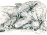 Draw Wolf Laying Down 180 Best Wolf Drawings Images Drawing Techniques Drawing