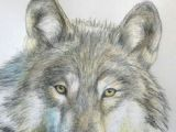 Draw Wolf Using Shapes 109 Best Wolf Images Wolf Drawings Art Drawings Draw Animals