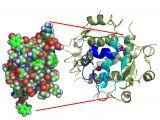 Drawing 2 Insulins Insulin Wikipedia