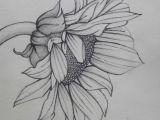 Drawing 737 77f63599a3bb40ca7bd36a7f18e522ff Jpg 564a 737 Kleurplaat Bloemen