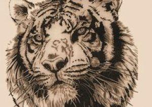 Drawing A Big Cat Head 117 Best Tatoos Images Big Cats Tigers Drawings