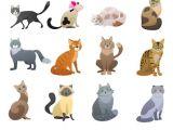 Drawing A Cartoon Cat Face Cartoon Cat Images Stock Photos Vectors Shutterstock