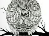 Drawing A Cartoon Owl 55 Best Doodle Images Tattoo Owl Owl Tat Drawing Owls