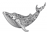 Drawing A Cartoon Whale Killer Whale Coloring Page Zentangles Whale Coloring Pages