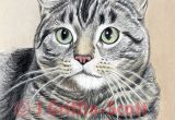 Drawing A Cat White On Black Paper How to Draw A Cat In Colored Pencil
