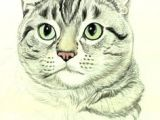 Drawing A Cat with Pencil 300 Best Drawing Cats Images In 2019 Draw Animals Cat