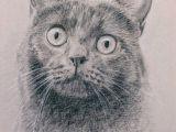 Drawing A Cat with Pencil Cat Portrait Custom Cat Portrait Cat Drawing Carbon Pencil On