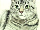 Drawing A Cat with Pencil How to Draw A Cat In Colored Pencil