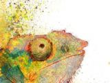 Drawing A Chameleon Eye 740 Best Chameleons Images In 2019 Chameleons Animal Drawings