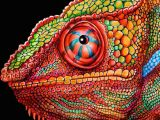 Drawing A Chameleon Eye Chameleon 3 Colored Pencil Drawing Signed by by Timjeffsart My