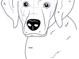 Drawing A Dog Face Step by Step Labrador is A Dog which Belongs to Gun Type Dog This Dog is Called