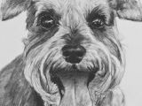 Drawing A Dog In Charcoal 1555 Best Dogs Images In 2019 Graphite Pencil Drawings Sketches