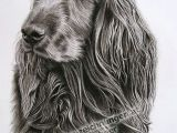 Drawing A Dog In Charcoal Twinkling Hundeportrait Hundezeichnung In Kohle Von Sabine