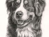Drawing A Dog Pencil Beautiful Bernese Mountain Dog 3 Drawings Of Dogs Mountain Dogs