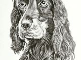 Drawing A Dog Pencil Dog Sketch Done In Pencil Dogs Pinterest Artwork Pet