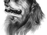 Drawing A Dog Portrait Abby the Golden Retriever Dog Art Sketch Art Inspiration