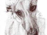 Drawing A Dog Portrait Cadejo Sighthouns In Art Greyhound Art Dog Art Dog Portraits