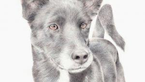 Drawing A Dog Portrait Custom Pet Portrait In 2018 Art Pinterest Pets Pet Portraits