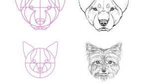 Drawing A Dog with Circles Step 13 but What About All the Breeds Most Of them aren T Really