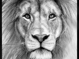Drawing A Lions Eye Realistic Drawings Of Animals 42 Incredibly Realistic and Adorable