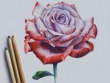Drawing A Pink Rose Drawing Rose Art Drawi