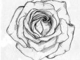 Drawing A Rose Petals Rose Sketch Ahmet A Am Illustrator Drawings Rose Sketch Sketches