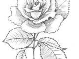 Drawing A Rose Time Lapse 175 Best Flower Drawings Images In 2019 Beautiful Flowers