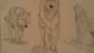 Drawing A Simple Wolf Simple Wolf Sketch I Did Most Of the Work the Only Thing that I