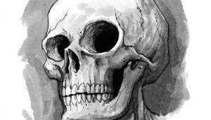 Drawing A Skull Head Cute Skull Illustration Skulls In 2019 Skull Sketch Drawings