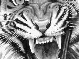 Drawing A Tiger Eye Roaring Tiger Animals Drawings Tiger Tattoo Tiger Drawing