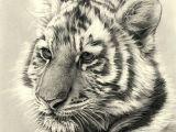 Drawing A Tiger Eye Tiger Cub Pencil Drawing Cool Art Pencil Drawings Drawings