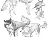 Drawing A Wolf Cub Realistic Husky Drawings Step by Step Google Search Stuff to
