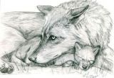 Drawing A Wolf Pup 180 Best Wolf Drawings Images Drawing Techniques Drawing