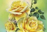 Drawing A Yellow Rose 812 Best Rose Garden Images In 2019 Beautiful Flowers Pink