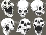 Drawing Anatomical Skull Collection Of Six Vector isolated Black and White Skulls Shown From