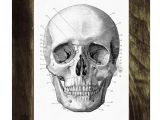 Drawing Anatomical Skull Human Skull Print In Black Anatomical Wall Art Decor Ska011wa4