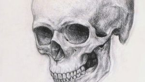 Drawing Anatomical Skull Realistic Skull Drawing Realistic Skull Drawing How to Draw A Skull