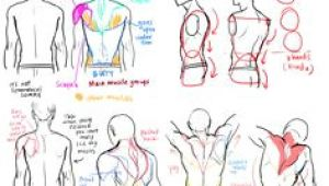 Drawing Anatomy Tumblr 79 Best Male Anatomy Reference Images Figure Drawing Body