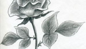 Drawing and Shading A Rose Image Result for L How to Draw A Simple Rose Buku Sketsa