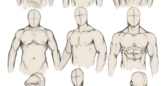 Drawing Anime Human Anatomy How to Draw the Human Body Study Male Body Types Comic Manga