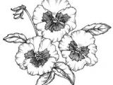 Drawing Australian Flowers 140 Best Flower Drawings Images Doodles Flower Designs Doodle Art