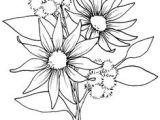 Drawing Australian Native Flowers 297 Best Australian Flora Images In 2019 Australian Native Garden