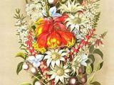 Drawing Australian Native Flowers 33 Best Australian Wildflowers Blooming Images Australian