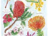 Drawing Australian Native Flowers 583 Best Australian Flowers Images Australian Wildflowers Aussies